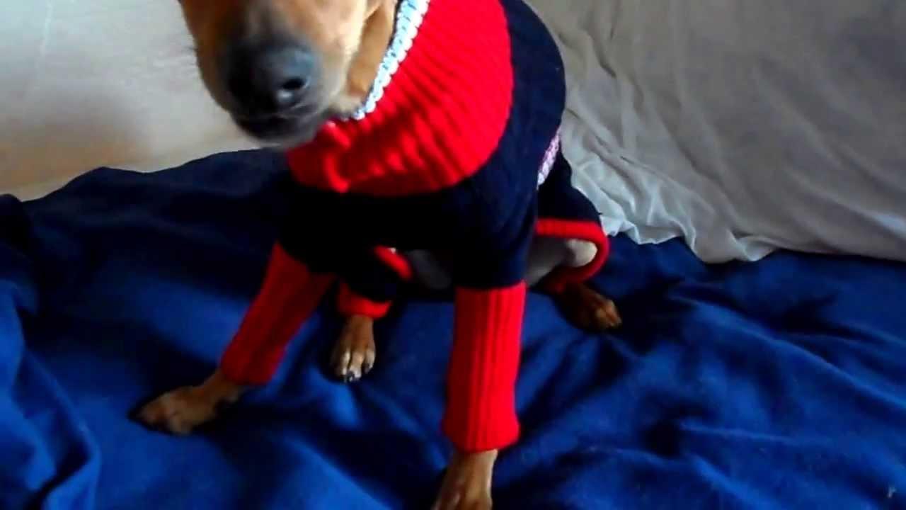 Mi Video Opinion  Jersey de punto azul con patas para perros - Tiendanimal .es 3d337006c61b