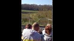 Alligator Airboat Rides at BJ'S Airboat Adventures