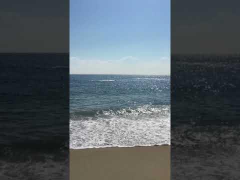 Whale Show Bethany Beach