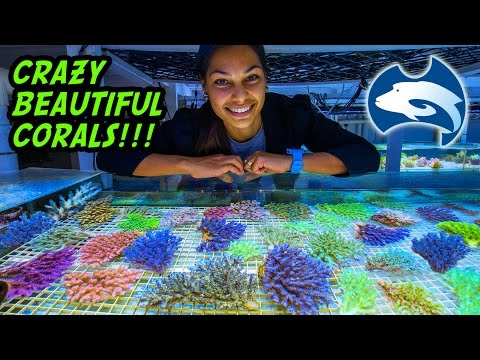 Cairns Marine's Vast Supply Of Beautiful Corals, Australia Tour Part 9