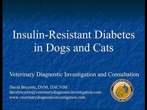 Insulin Resistant Diabetes In Dogs And Cats