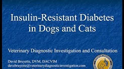 hqdefault - Insulin Resistance Diabetes In Dogs
