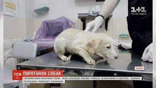 У Харкові врятували собак, яких жінка роками не випускала з квартири