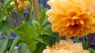 Мой цветущий сад ...Июль 2019.#сад#цветы#лето#красота