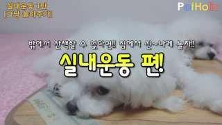 [강아지 실내운동] 제1탄 - 그냥 놀아주기 - Playing with dogs