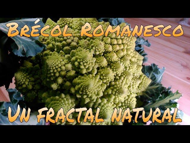 BRÉCOL ROMANESCU, UN FRACTAL NATURAL