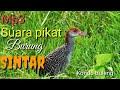 Pikat Burung Sintar  Mp3 - Mp4 Download