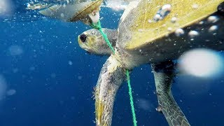 turtle-rescue-out-to-sea-how-to-make-sustainable-food-choices