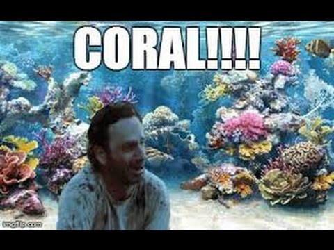 exploring the coral reef with rick grimes the walking