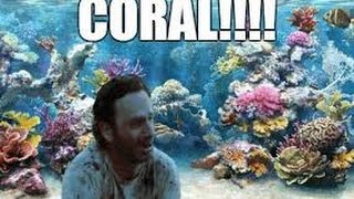 Exploring The Coral Reef With Rick Grimes (The Walking Dead)