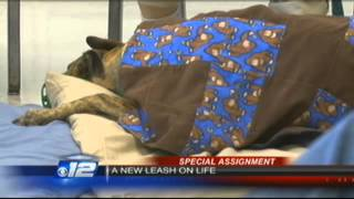 greyhounds give inmates new leash on life news 12