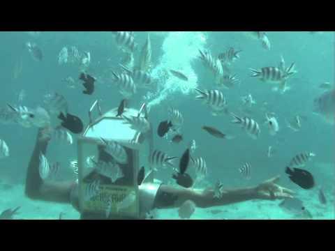 Solarseawalk & Underseawalk in Mauritius