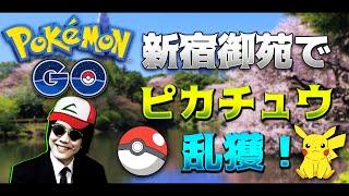 【ポケモンGO】ピカチュウの森こと新宿御苑で乱獲してみた thumbnail