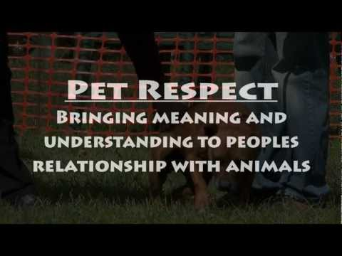 pet-respect---volunteers-making-a-difference.
