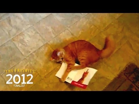 "The Friskies 2012 Finalist: ""Attack of the Ninja Cat!"" (Cat Comedy)"