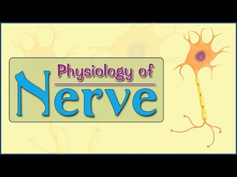 Easy Physiology | Nerve | 2-Action Potential