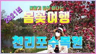 [4K 국내 태안 천리포수목원 봄꽃 여행] 4월 가볼만…