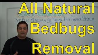 Oxy-Green All Natural BedBug Removal Basics