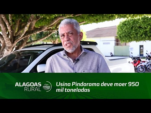 Usina Pindorama deve moer 950 mil toneladas de cana-de-açúcar na safra 2020/2021