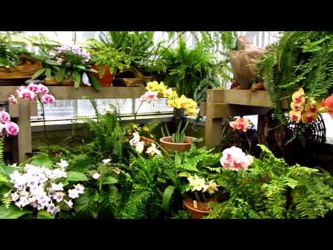 Sherman Library & Gardens - Corona Del Mar, Orange County, CA - Orchid Flowers