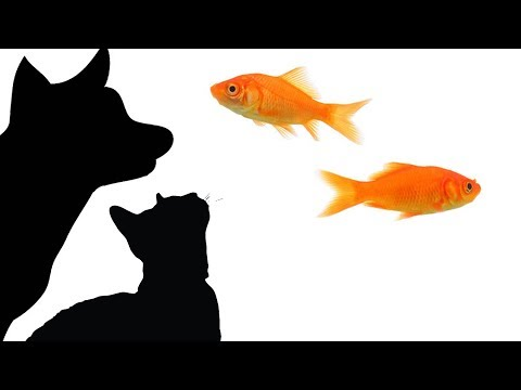 CAT GAMES - CATCHING FISH 1 HOUR MARATHON (FOR CATS ONLY)