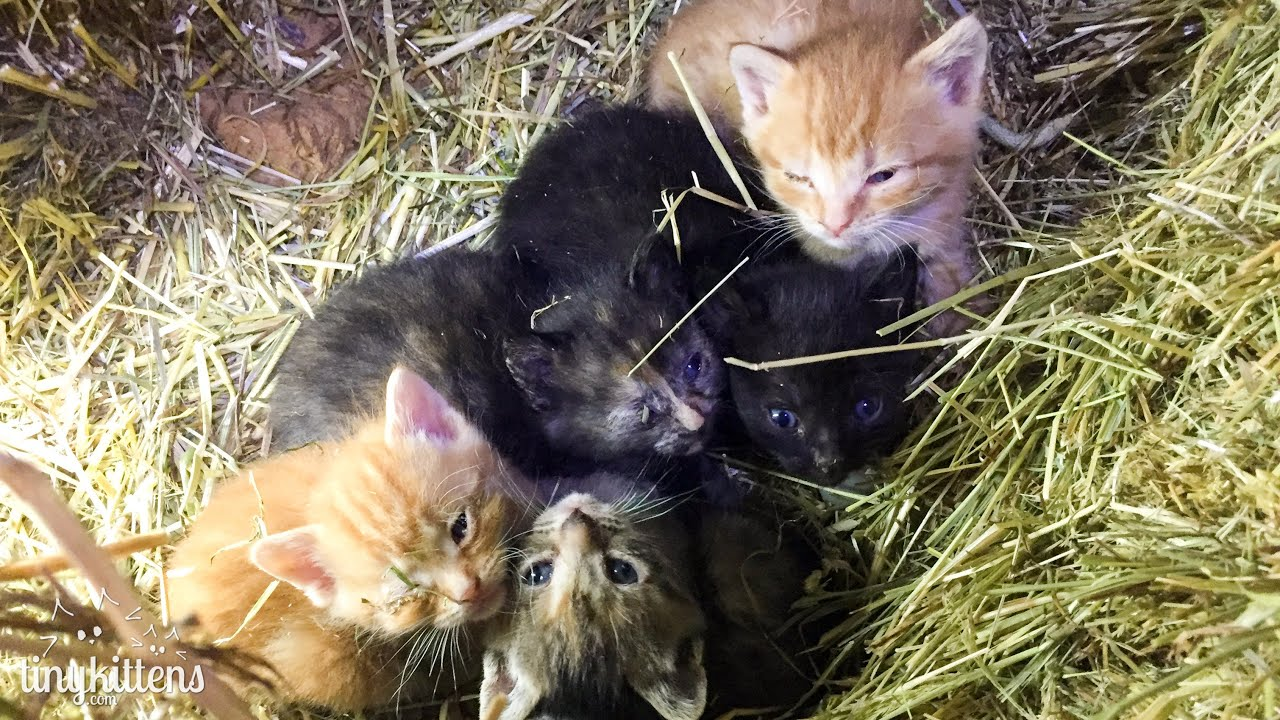 Live Surprise Baby Kittens From Stanley S Feral Colony