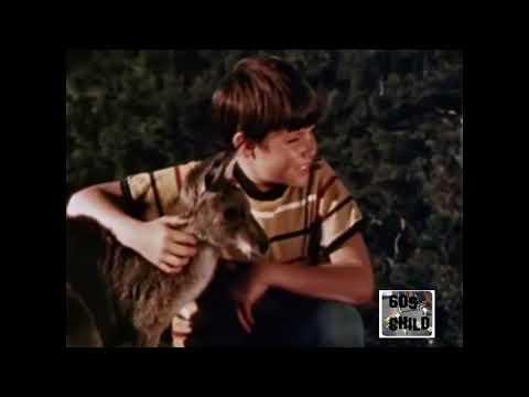 skippy the bush Kangaroo  1960s  Intro and closing titles