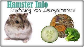 Hamster Info || Ernährung Zwerghamster || Informationen + Tipps!