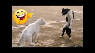 أفضل فيديو مضحك عن الحيوانات 😂_  اتحداك ان لا تضحك 2019/Best funny video about animals