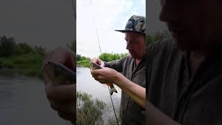 Голавль на ультралайт рыбалка Shorts