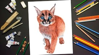 Drawing a CARACAL KITTEN - Realistic Time Lapse Drawing/Painting