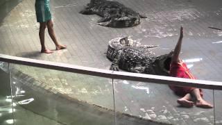 Tajlandia - Thailand - Krokodyle [HD]
