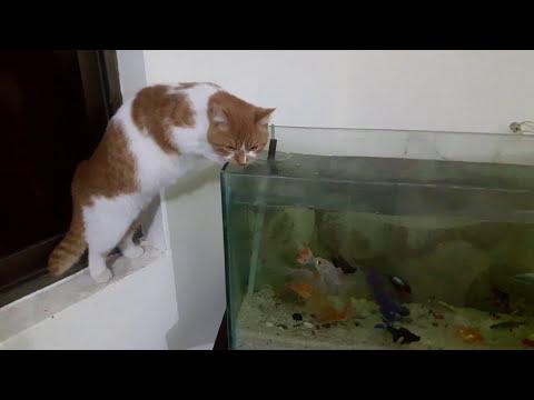 A fisher cat