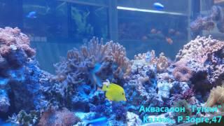 Морской аквариум Аквасалон Гуппи(, 2014-12-28T21:58:38.000Z)