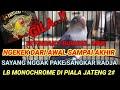 Setingan Tandem Lb Monochrome Jadi Tontonan Sampai Akhir Cara Proses Betina Figter Gacor Jumper  Mp3 - Mp4 Download