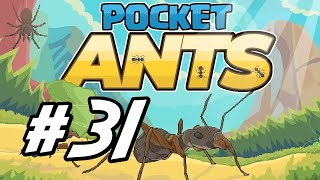 """Pocket Ants - 31 - """"Green Ants and a Stone"""""""