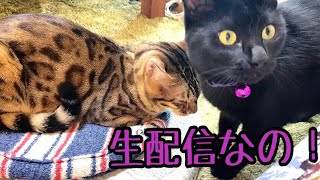 【ランチ生配信】四連休明けのちょっとしんどい日は猫でも見てほっこりしませんか?生配信