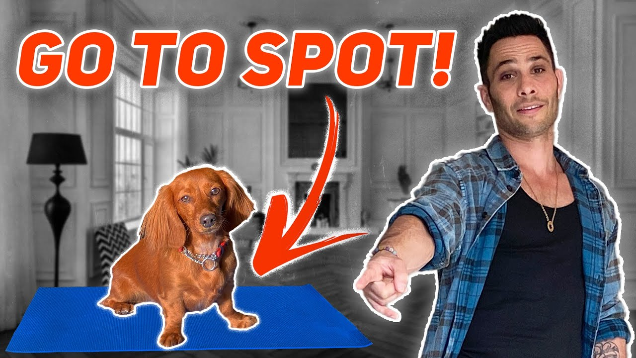 "TEACH  DOGS "" GO TO SPOT"" THE BEST WAY / TUTORIAL W/ DOG EXPERT JUSTIN SILVER"