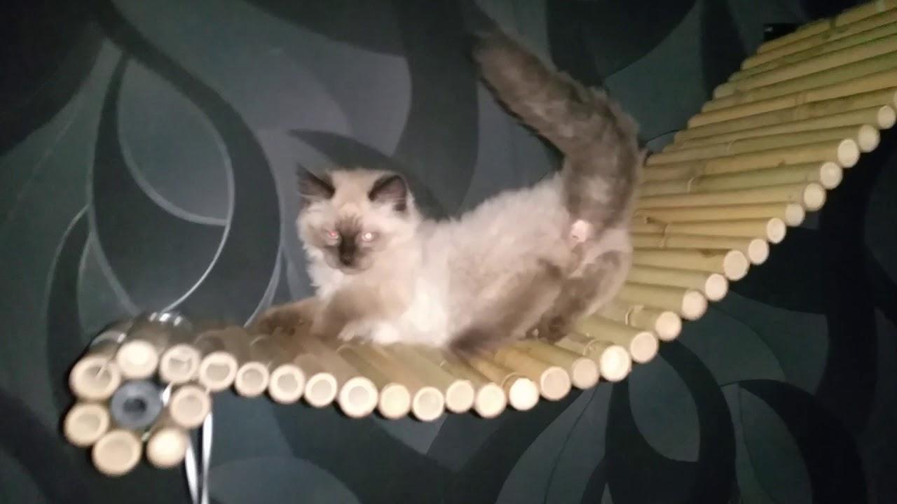 Arbre A Chat A Faire Maison arbre à chat avec pont en bambou suspendu fait maison