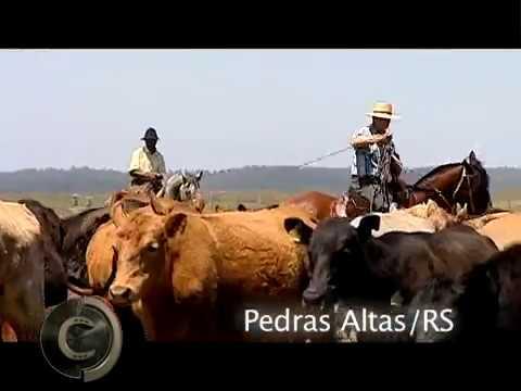Santa Eulália, cavalos forjados no serviço e na pista.
