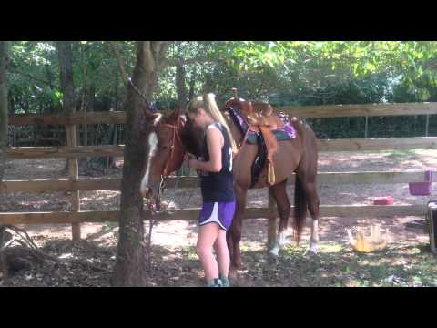 Steel 2012 AQHA Gelding for sale (480) 205-3613 from YouTube · High Definition · Duration:  11 minutes 6 seconds  · 22.000+ views · uploaded on 16.10.2016 · uploaded by 8 Quarter Horses