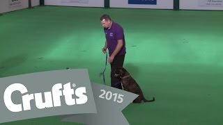 Inter-regional Obedience - Beginners Class - Part 1 | Crufts 2015