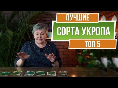 ТОП 5 Сортов Укропа ✔️ Выбираем семена укропа