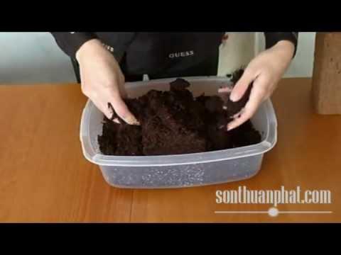 Cách sử dụng Mụn Dừa (cocopeat)