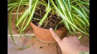Si Tienes Una De Estas Plantas En Tu Casa Entonces Cuídala Porque Tienes Un Tesoro Y Ni Cuenta Te Da
