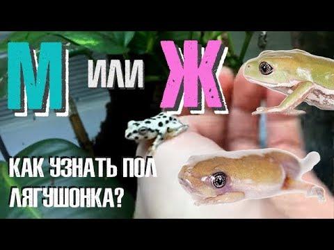 Вопрос: Подскажите, как же отличать лягушек от жаб?