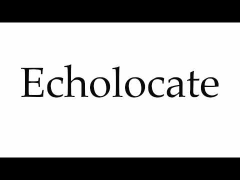 How to Pronounce Echolocate