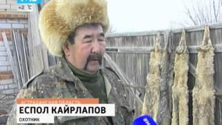 Степные Волки Открыли Сезон Охоты На Домашних Животных. 2014