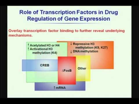 drug addiction and genetics