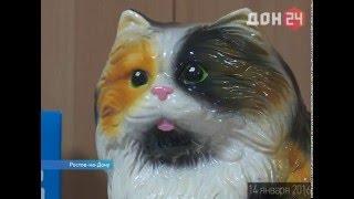"""""""котокафе"""" - Новый термин для ростовских любителей кошек"""